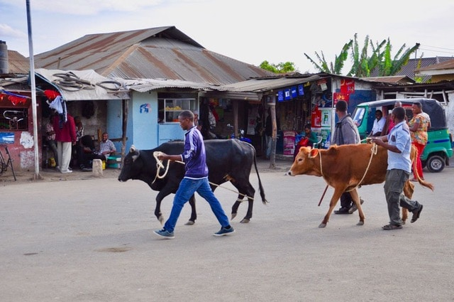 veehouderij Tanzania