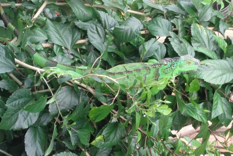 """Ingeborg uit Guatemala: """"Eindelijk ontstaat er een groene oase op de vuilstort die we kochten."""""""