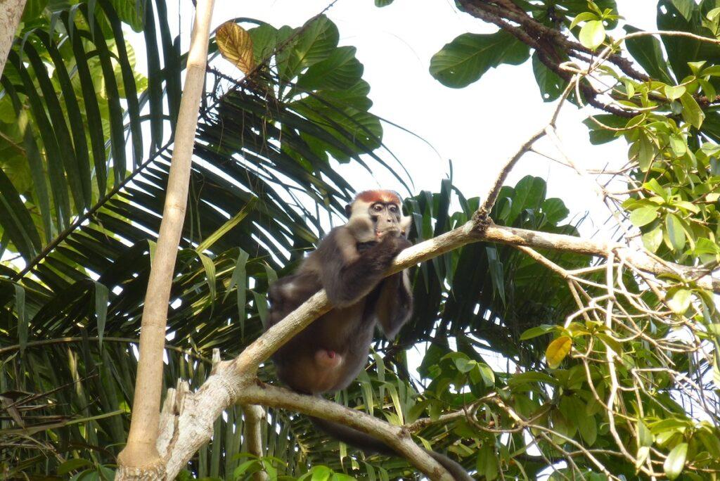 De ultieme trip door ongerepte wildlife paradijs Gabon