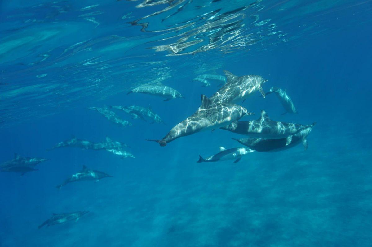 Onderwaterwereld